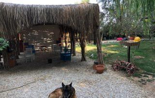 akyaka çadır kampı